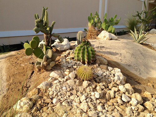 Thriving Cactii by malyousif