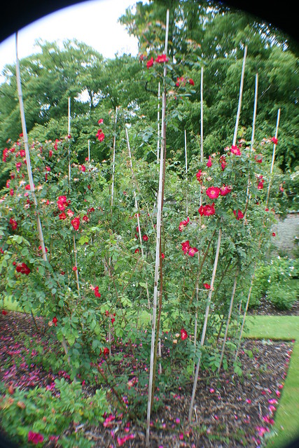 Rose Garden at Castle Howard