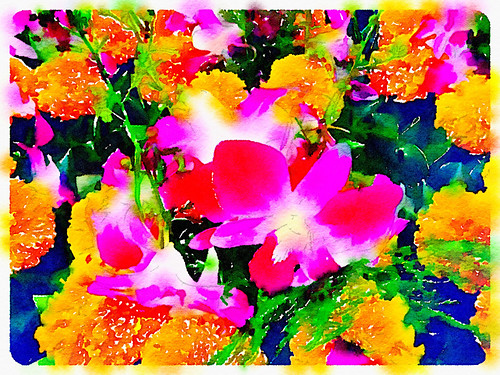 Bangkok Blooms Painted in Waterlogue