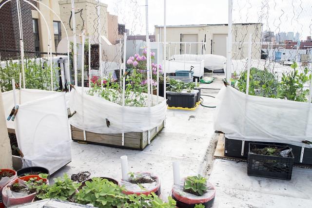 Garden Update 5_25_14_3
