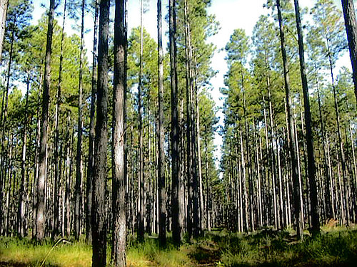 【Cross系列】氣候變遷與生物多樣性:互為關聯的整體