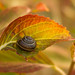 Life at a Snail's Pace by ecstaticist - evanleeson.com