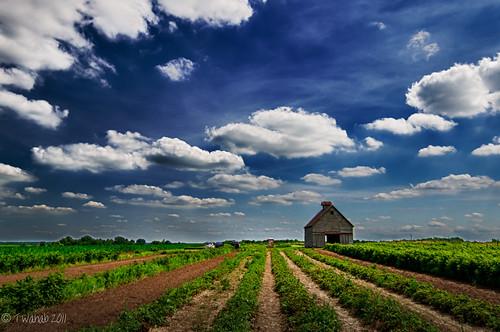 clouds barn countryside strawberry berry nikon berries farm farming raspberry hdr upick d7000 oliveberryacres