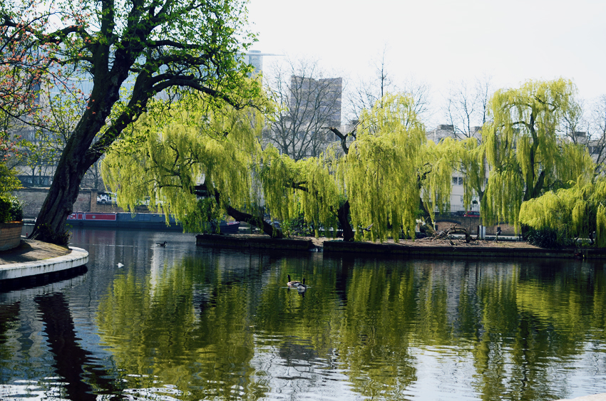 little venice weeping willow