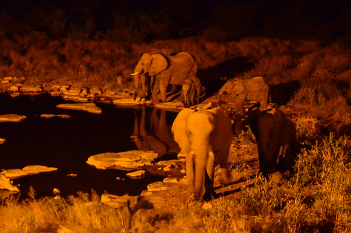Family of elephants, Halali waterhole, Etosha NP