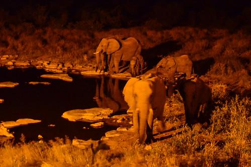 Family of elephants, Halali waterhole, Etosha NP