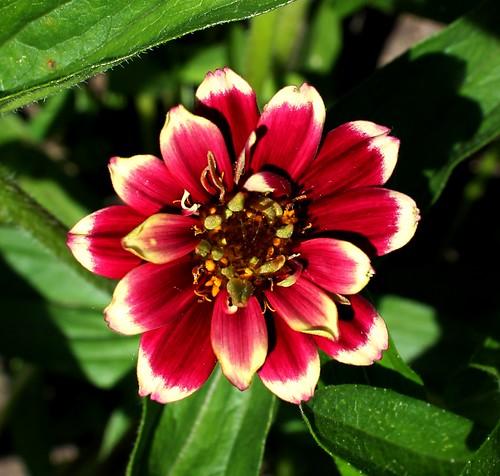 June 15 First Flower 2014