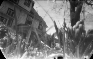 Pinhole: Back yard with Hyachinth, April 12 2014