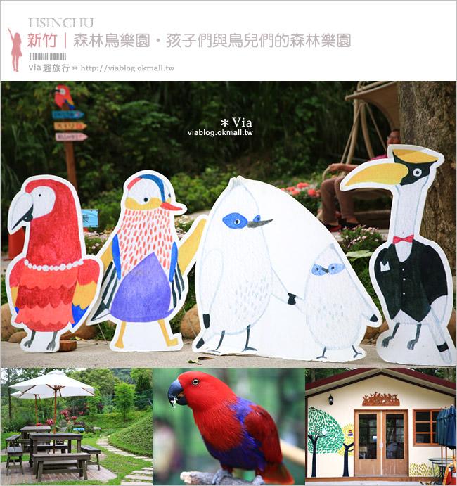 【新竹景點推薦】森林鳥花園~親子旅遊的好去處!在森林裡鳥兒與孩子們的樂園1