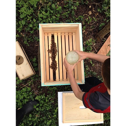 """Sugar water for the bees. Oliver has no fear: he has 10,000 new friends. All named """"Bud"""". #urbanfarming #bees #localbees #honey #OllieFarms"""