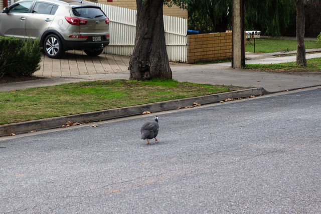 Why did the bird cross the road?