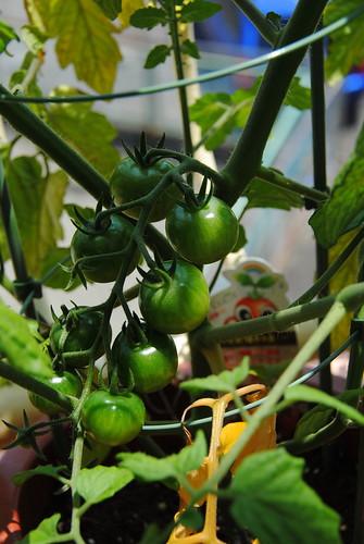 Garden 2014 022r