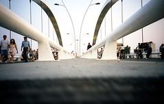 Rats on the New Bridge