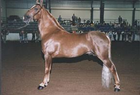 Walking_horse