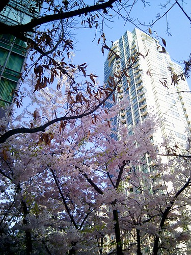 Downtown blossoms