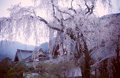 20110413東京山梨IIIa_AGFA_HDCplus400_025