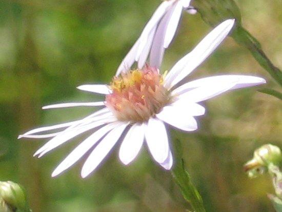 [a single flower]