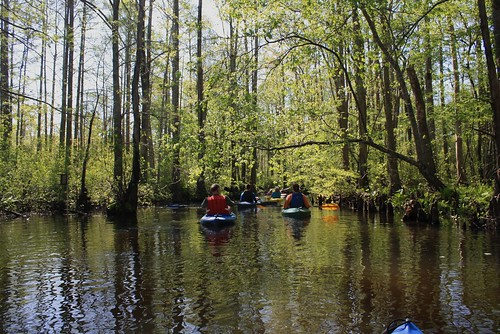 water river virginia kayak chesapeakebay tributary dragonrun