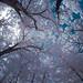 Infrared Tenafly 2012 (10 of 40)-Edit.jpg by Michael Feuerstein