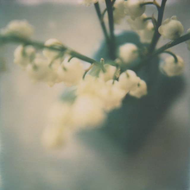 Polaroid Love Affair - Lily of the Valley