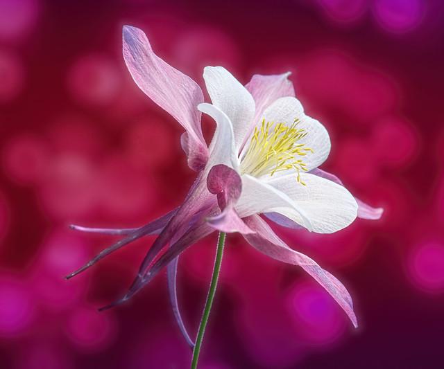 Flores preciosas a gallery on Flickr