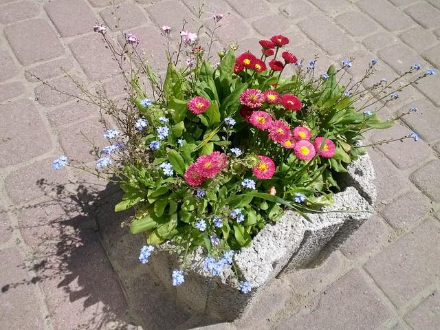 street flower. Lviv, Ukraine