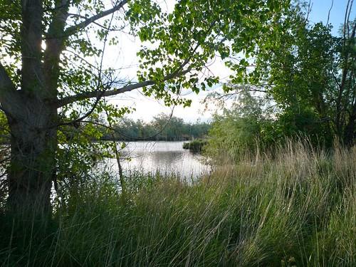 trees pond idaho cottonwood grasses elm nampa wilsonsprings wilsonponds trophypond