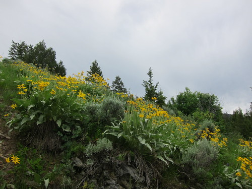 wildflower, wildflowers IMG_6855
