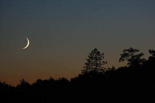 Trees and Setting Moon