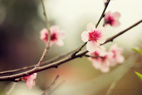 Suspiros de primavera