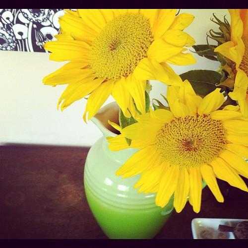 129/366 :: sunflowers