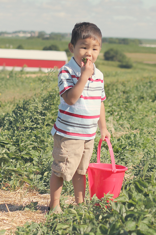 Max - eating strawberries -blog