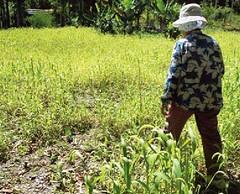 《串起莽噶艾》是董景生企畫的第四本民族植物書,關鍵人物一位熟知植物的老太太。(圖片來源:林務局)