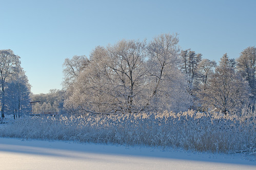 blue winter sun white lake snow ice reed nature beautiful landscape nikon europe frost sweden crisp scandinavia wonderland 50mmf14 lightroom mälaren gripsholm mariefred södermanland d7000