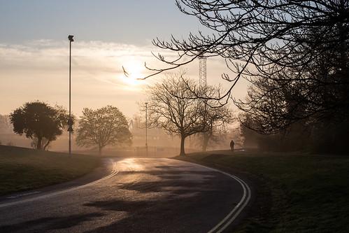 Morning stroll...