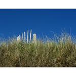 OrkneyMayJune2011 (340)