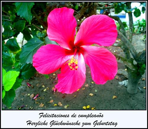 birthday aniversario ecuador gloria geburtstag cumpleaños 2904