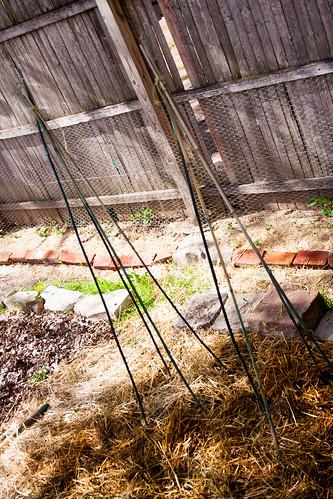 11beanpoles.jpg