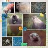 2013-1001-oceanopolis-phoque