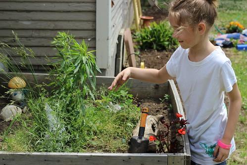 Working Garden 5