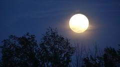 night(0.0), crescent(0.0), cloud(1.0), sunlight(1.0), sun(1.0), moon(1.0), light(1.0), moonlight(1.0), full moon(1.0), celestial event(1.0), darkness(1.0), astronomical object(1.0), sky(1.0),