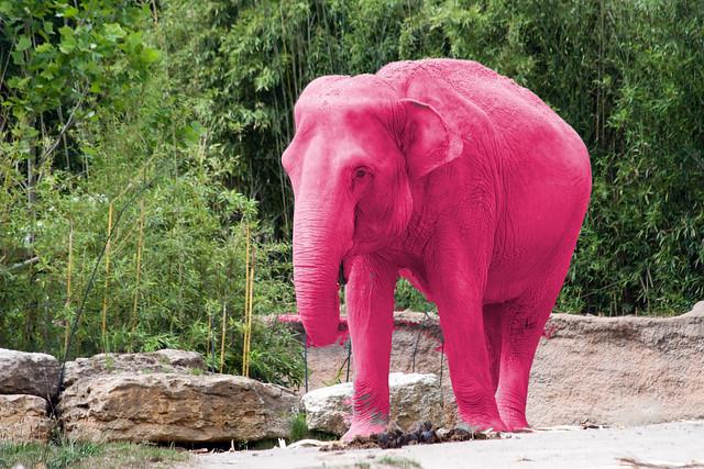 dumbo rosa elefanten