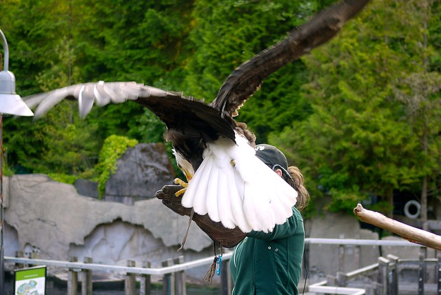 Birds Up Close | Vancouver Aquarium