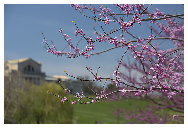Forest Park 2014-04-19 4