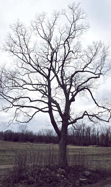 anteketborka.blogspot.com,   printemps 5
