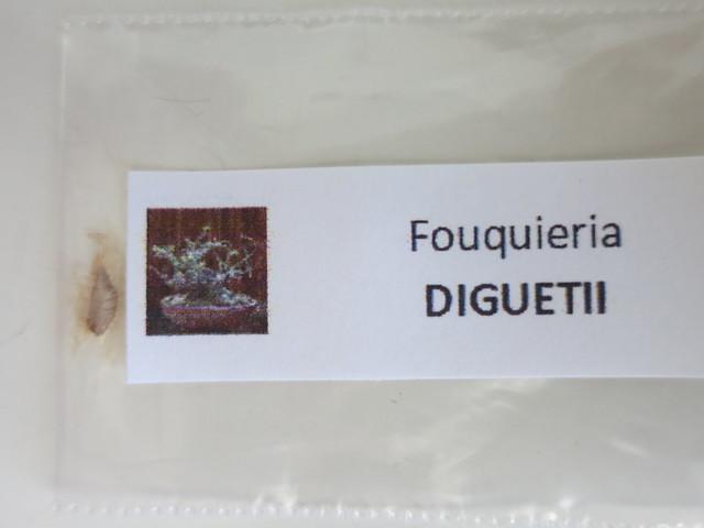 Семена Fouqueria diguetii