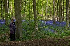 West Woods Marlborough Wiltshire - May 2014