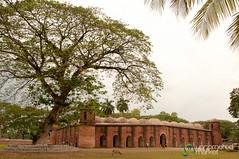 Shait Gumbad Mosque Under Tree - Bagerhat, Bangladesh