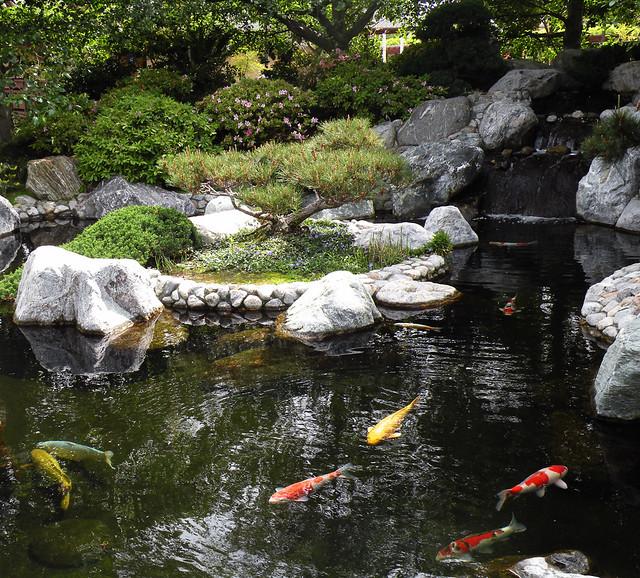 Japanese Garden Koi Pond