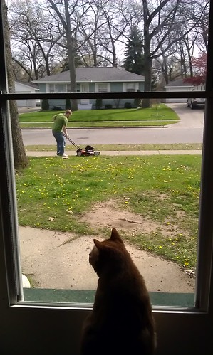 Leki is supervising @ckarath's lawn mowing